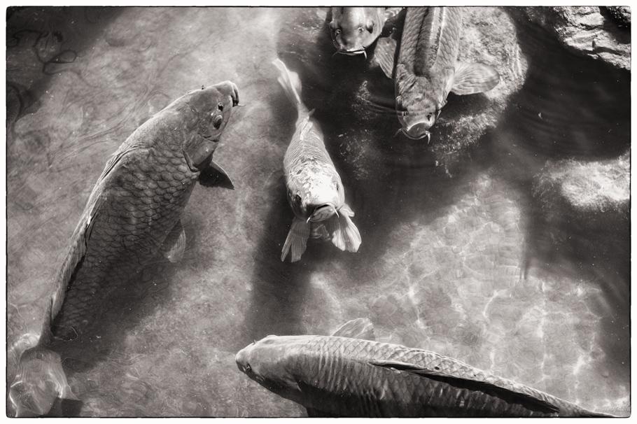 Leica M-Monochrome+Elmar50mm