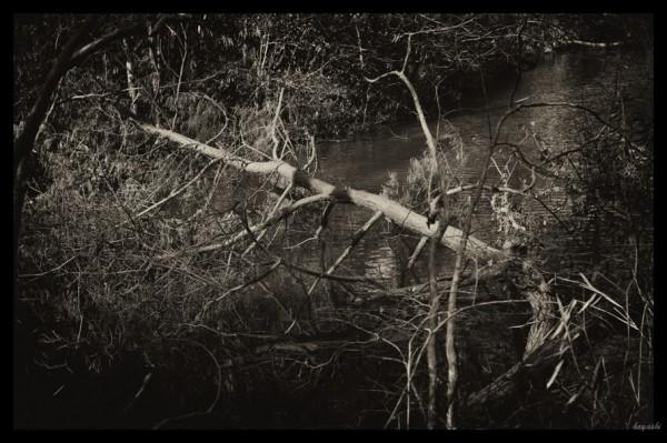 Leica M-Monochromeで撮影