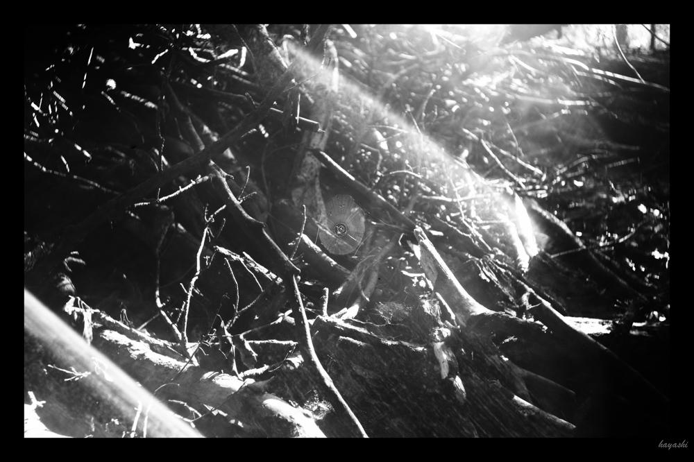 Leica M-Monochrome + Elmar