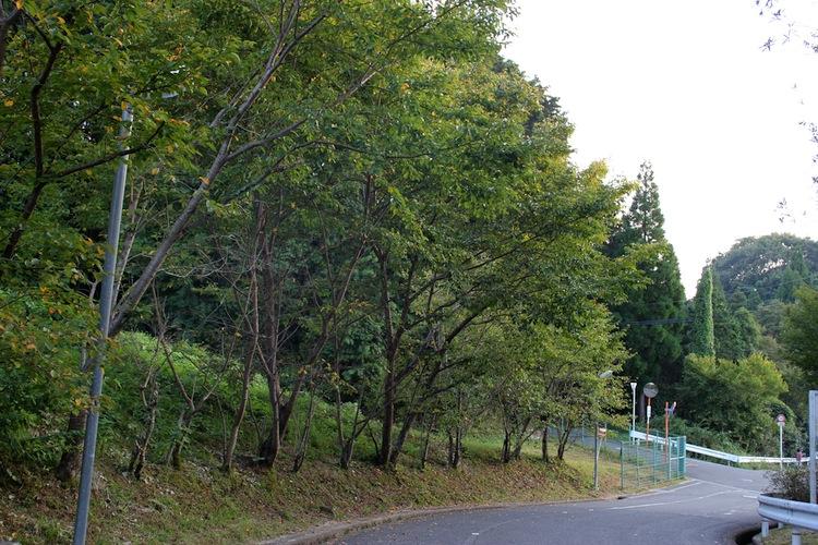 秋分の日の山道