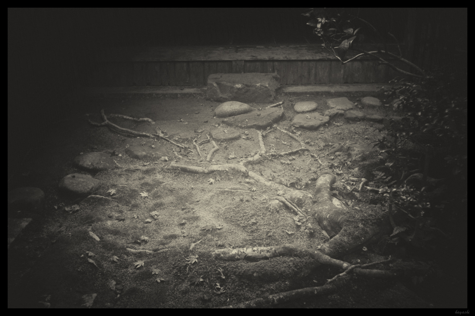 Leica M-Monochrome+elmar