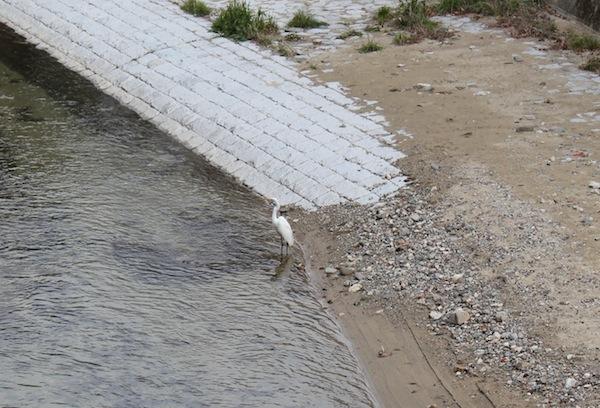 一羽の白鳥