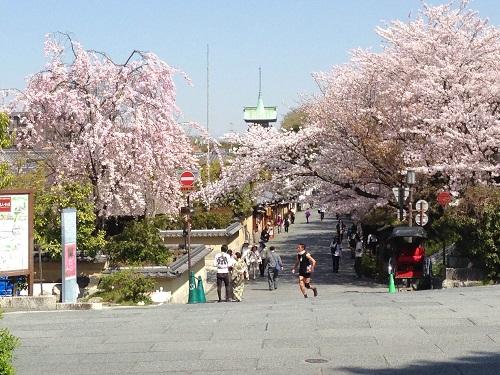 高台寺の桜 平成25年4月