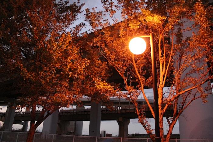 夕方の公園にて