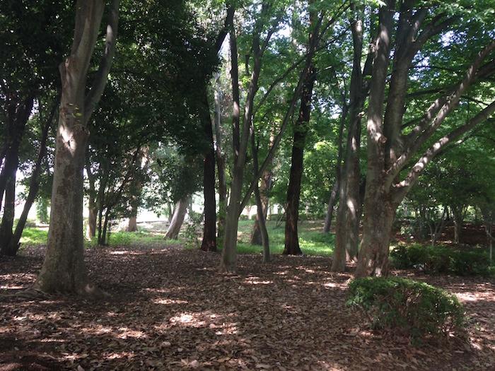 木陰で一休み(7月 緑地公園)