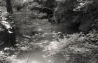 沼の写真【今夜の一枚】