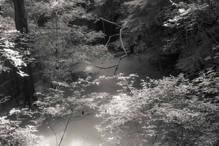 沼に光が降りる
