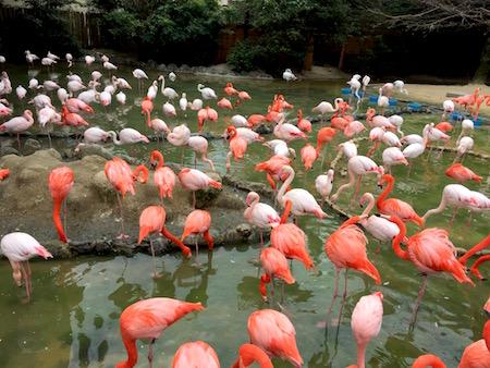 フラミンゴ 王子動物園にて
