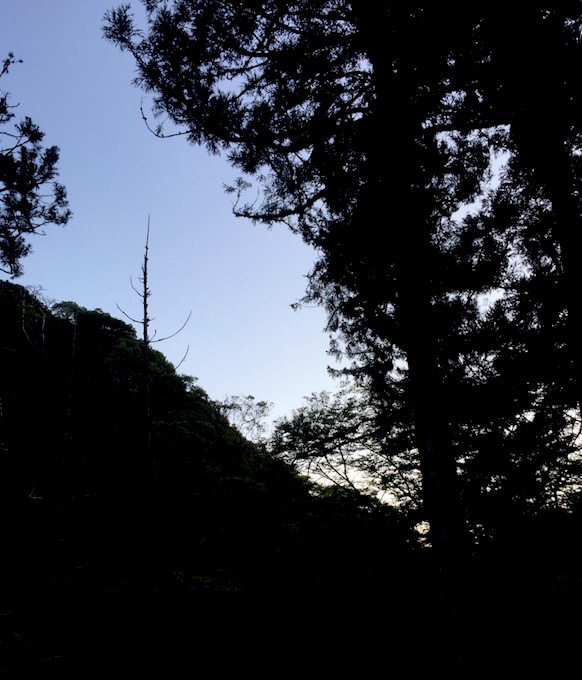 朝の山歩き