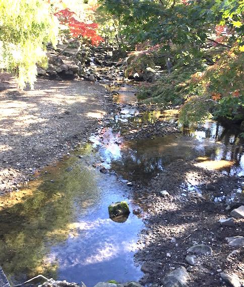 奈良の公園 秋