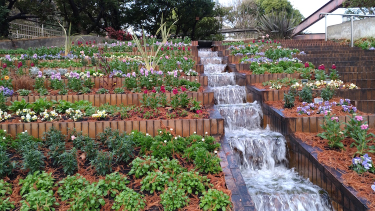 植物園の花壇