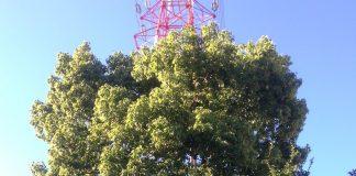 緑地公園駅前 大きな木と鉄塔