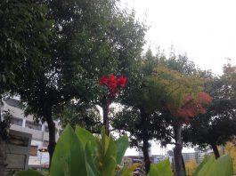 近所の公園にて 一輪の赤い花が目に止まりました。