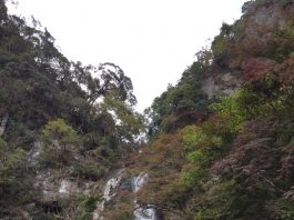 箕面の滝道が久しぶりに開通しました!