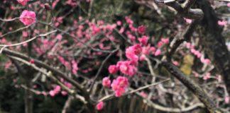 咲け、美しく