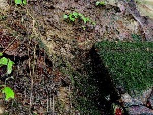 岩清水と苔