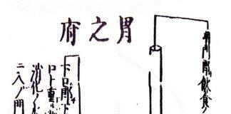 胃の腑(『臓腑経絡詳解』より)