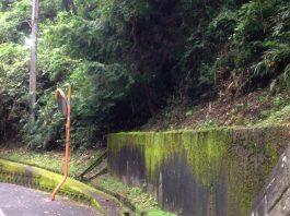 急に涼しくなって、伸び盛っていた山道の木も、勢いが急になくなったように見えます。