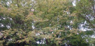 大阪の山道にて(10月中旬の紅葉)