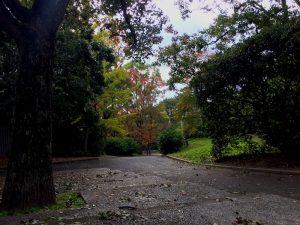 秋の緑地公園を散歩する