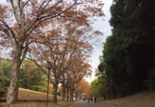 万博公園の紅葉