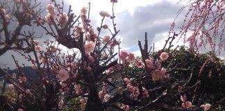 梅の花でしょうか?なんとなく迫力のようなものを感じました。