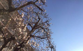咲き始めた近所の桜