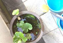 植物の水やり