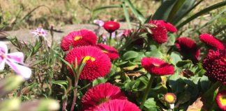 昆虫の目線から花を見る