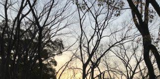 森からの夕焼け。最近、西の空が綺麗です。