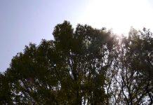 午前の木漏れ日