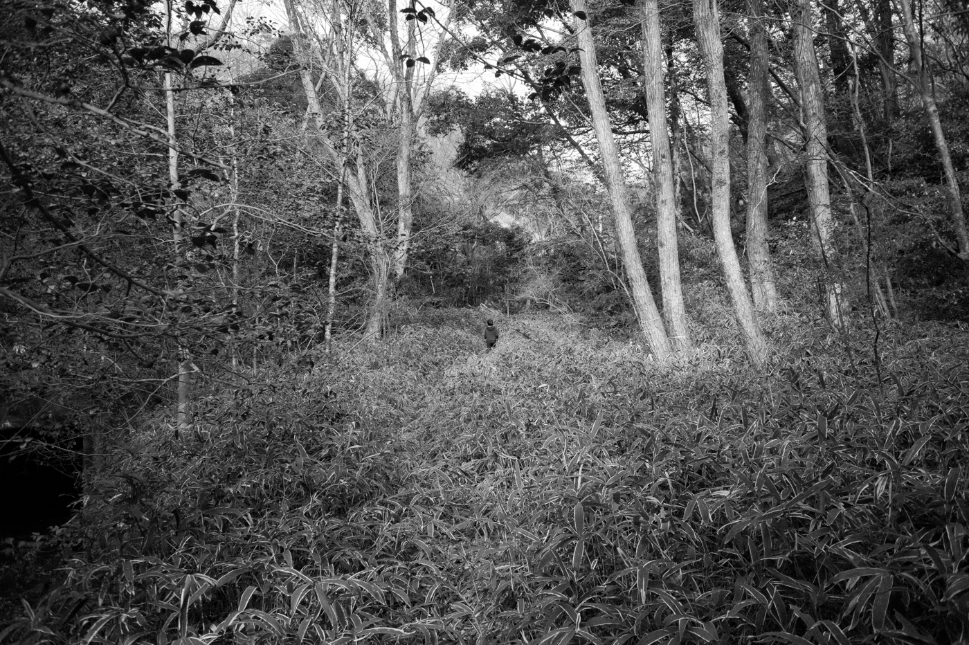 森で。 【今夜の写真】