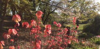 緑地公園の大葉紅柏