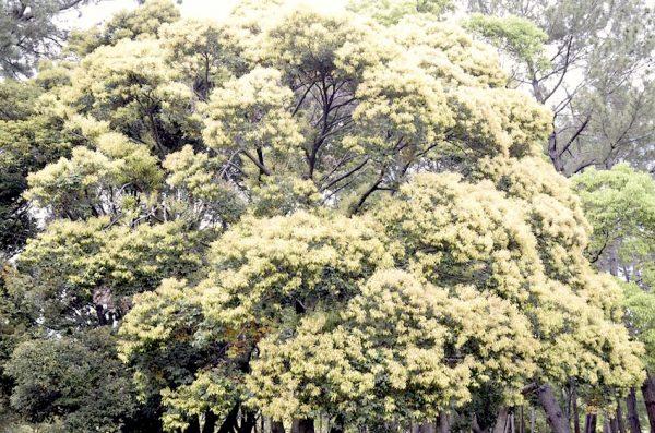 生い茂る木