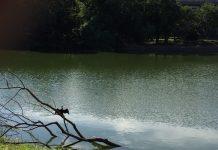 緑地公園の池と水鳥