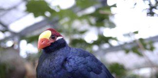 きれいな鳥
