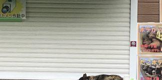 雨上がりの道の近くにある屋台にて。地面がぬかるんでいるので、カウンターで昼寝をすることにしたのでしょう。