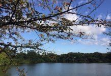 朝の散歩 秋の風