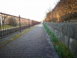 水仙の遊歩道