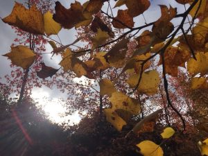黄色味を帯びた葉