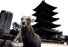奈良の鹿さん