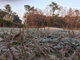 緑地公園 広場に霜がおりる