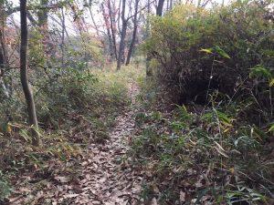 森の中の細道