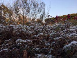 霜で白く彩られた植物