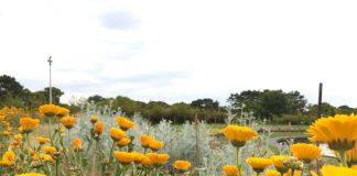 緑地公園 オレンジのガーベラ