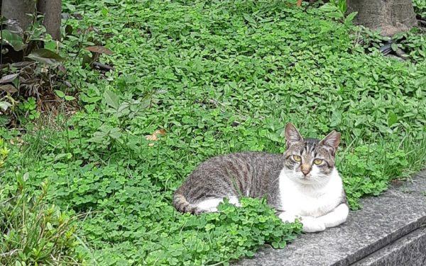 綺麗な野良猫さん