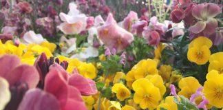 緑地公園の花壇 春の花いろいろ