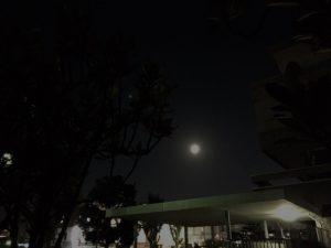 夏の散歩は夜が心地良い
