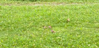 公園にて、カメラ目線のスズメが二匹