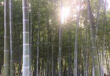 緑地公園内の竹林